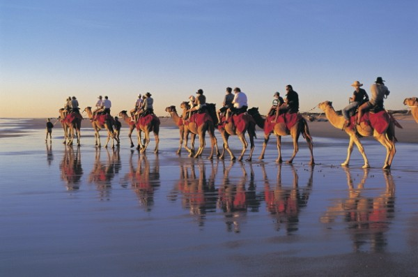 Australia - WA The Kimberley - Broome - Camel Rides