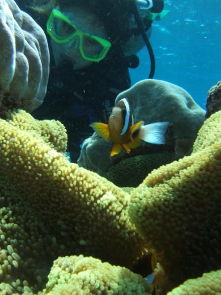 australia coral reef pesce pagliaccio