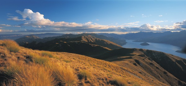 NZ_Wanaka_Tussocks.jpg