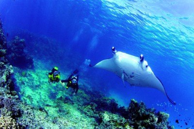 manta e subacquei Polinesia