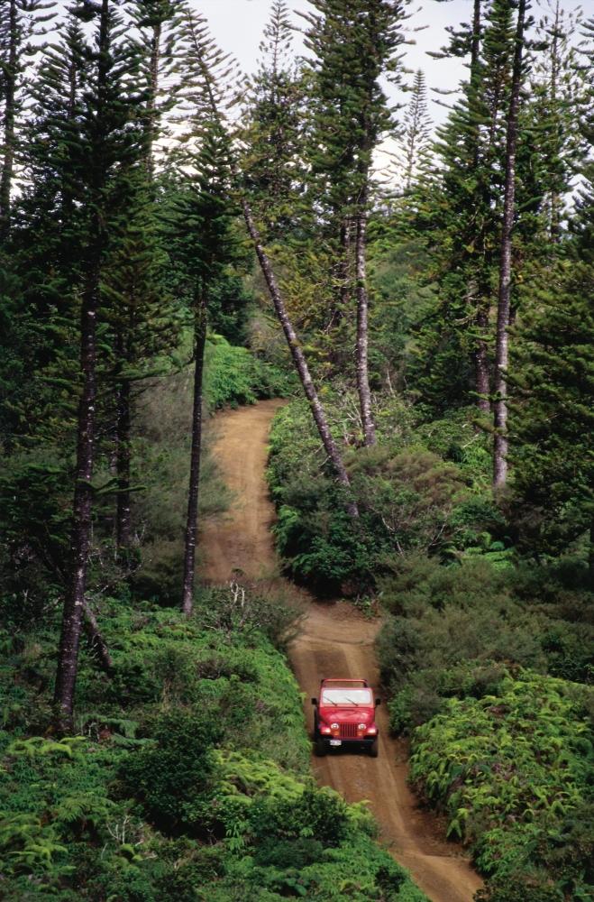 Lanai Munro Trail  copyright Hawaii Tourism Authority